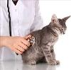 Ветеринарные клиники в Алексеевском